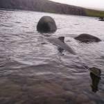 Haukadalsá - Veiðistaðavefurinn