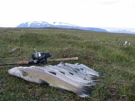 Ólafsvatn Arnarvatnsheiði - Veiðistaðavefurinn